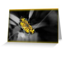 Yellow Butterfly set against black and white Greeting Card