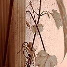 Summer Vine, Saint Paul by Timothy Wilkendorf