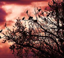 Roosting by Thomas Stevens