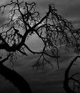 leafless  by Joshua Greiner
