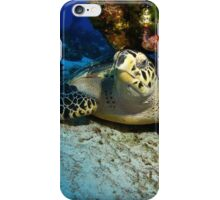 Hawksbill Turtle Under A Coral Ledge iPhone Case/Skin