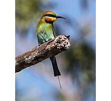 ''Rainbow Bee-eater 2'' Photographic Print