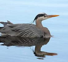 Great Blue Heron Swimming by THurdCreations