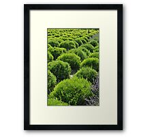 For in the true nature of things, if we rightly consider, every green tree is far more glorious than if it were made of gold and silver. Framed Print