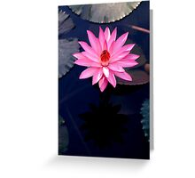 Just One - pink waterlilly Greeting Card