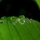 Dewy Green Leaves by Joe Mortelliti