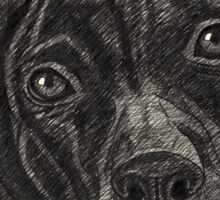 Staffordshire Bull Terrier Pen Drawing Sticker