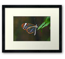 """""""Cellophane Wings"""" Framed Print"""