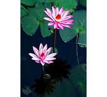 Two of a kind - pink waterlillies Photographic Print