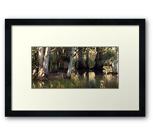 Down by the duck pond Framed Print