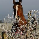 Cold Ears !!!! by AnnDixon