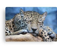 Sleeping Jaguar Canvas Print