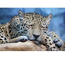Sleeping Jaguar Photographic Print