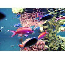 Monterey Bay Aquarium - Coral Reef Exhibit Photographic Print