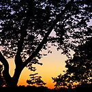 Silhouetted Sunset by Jen Waltmon