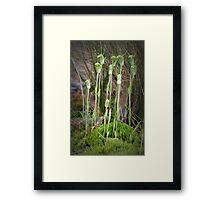 Dwarf Greenhoods Framed Print