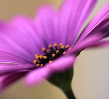 derring daisy by mickdeblood
