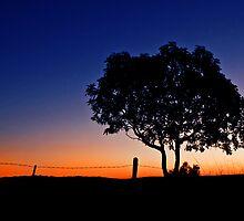 One Tree Hill - Marburg Qld Australia by Beth  Wode