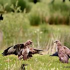 Buzzard Warning. by vonniepyn