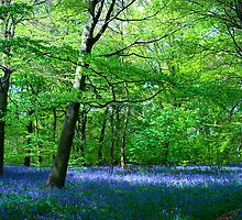 Bluebell Carpet in Shaw Wood by Theresa Elvin