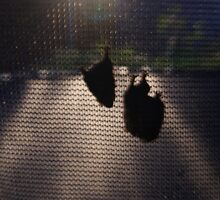 three baby bats while momma is away by rue2