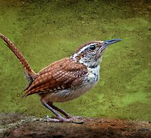 Carolina Wren in Profile by Bonnie T.  Barry