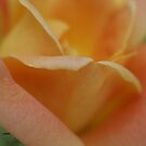 just peachy rose by rue2