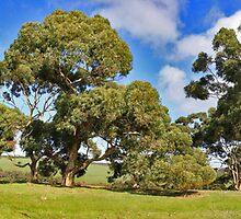 Islander Estate Vineyards by Stephen Mitchell