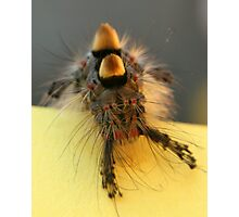 Hamish the hairy catterpillar! Photographic Print