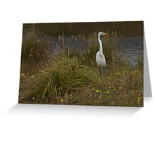 Snowy Egret - Point Reyes National Seashore Greeting Card