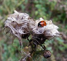 A Ladybird's day out by Paul Hickson