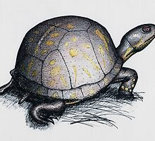 Eastern Box Turtle by TMQDong