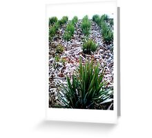 Tufts Of Grass Greeting Card