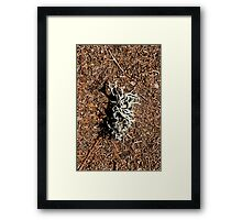 Textures and shadows Framed Print