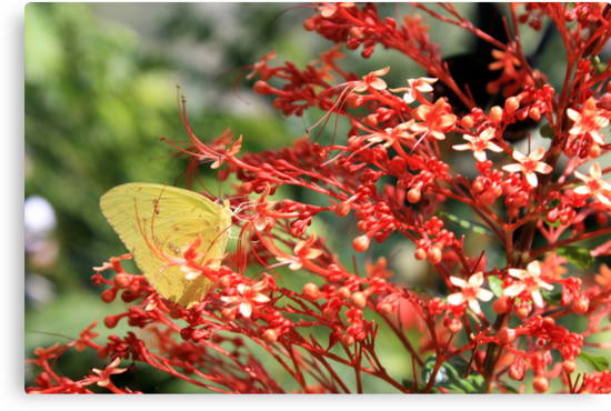 Sulphur Butterfly and Red Pagoda by AuntDot