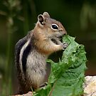 Just a Tiny Snack by Betsy  Seeton