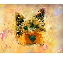 Dog yorkshire terrier art Photographic Print
