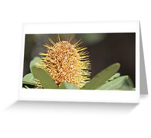 Yellow Banskia Greeting Card
