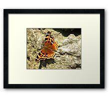 Compton Tortoiseshell Butterfly Framed Print