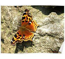 Compton Tortoiseshell Butterfly Poster