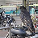 Dutch biker by Marjolein Katsma