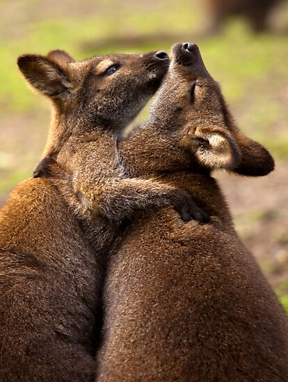 Hugs by DawsonImages