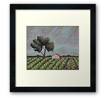Chateauneuf Vineyard  Framed Print