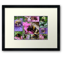 Bee-eautiful Bee Collage...... Framed Print