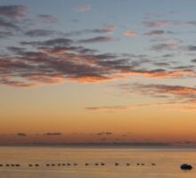 A Long Line of Canada Geese at Sunrise Sticker