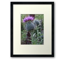 Beetles on a Thistle Framed Print