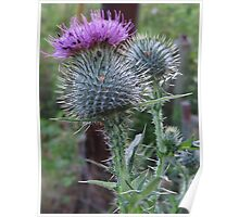 Beetles on a Thistle Poster