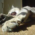 Yawn.......... by Graham Pritchard