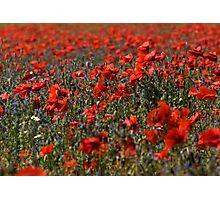 The Poppy Fields Photographic Print