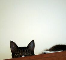Hiding Above the Kitchen Cabinets by BarkingGecko